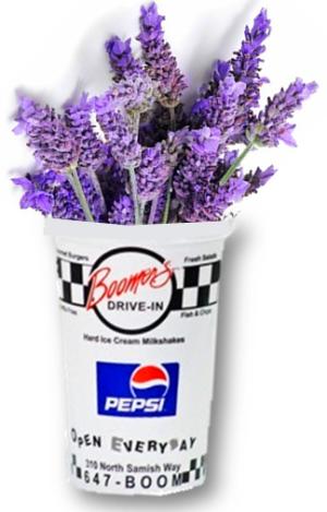 boomers lavender milkshake